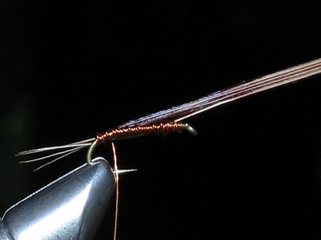 Pheasant Tail(Sawyer Nymph)2.jpg