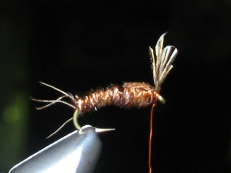 Pheasant Tail(Sawyer Nymph)4.jpg